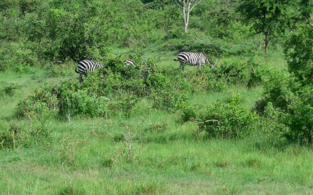 Uganda, Part I